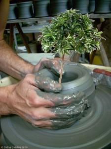 Tree_Pot