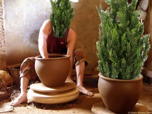 Tree_potter_2